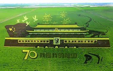 东营巨幅稻田画献礼新中国成立70周年