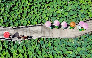 青岛:荷园如画游人来 人面荷花相映红