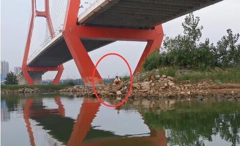 临沂17岁少年跃下高桥 突遇暴雨水位上涨被困孤岛