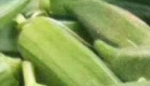 农户无经验栽种惹麻烦 沂源12万斤黄秋葵急寻销路