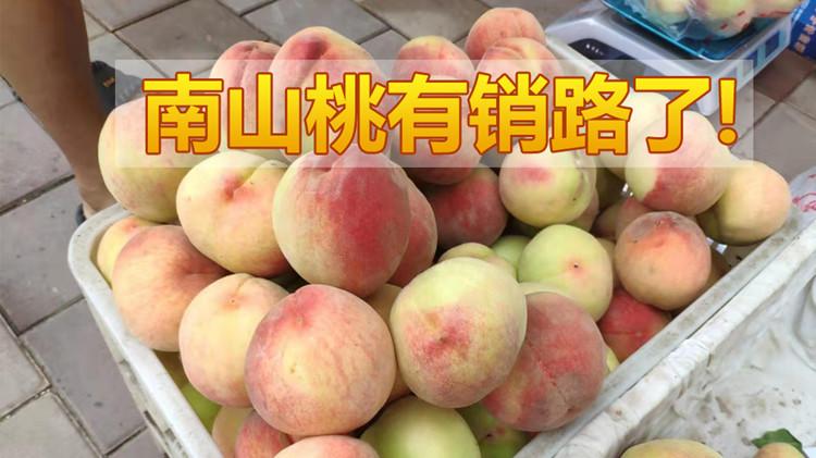 南山套滞销 主播王雨化身桃农帮卖桃
