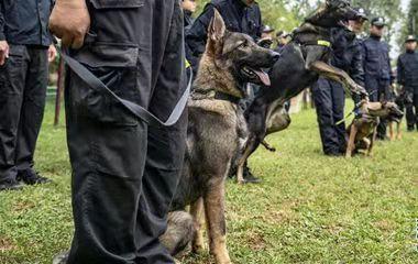 """我国首只警用克隆犬""""昆勋""""通过考核正式入警"""