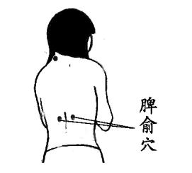 图片据《针灸经络经穴图》2