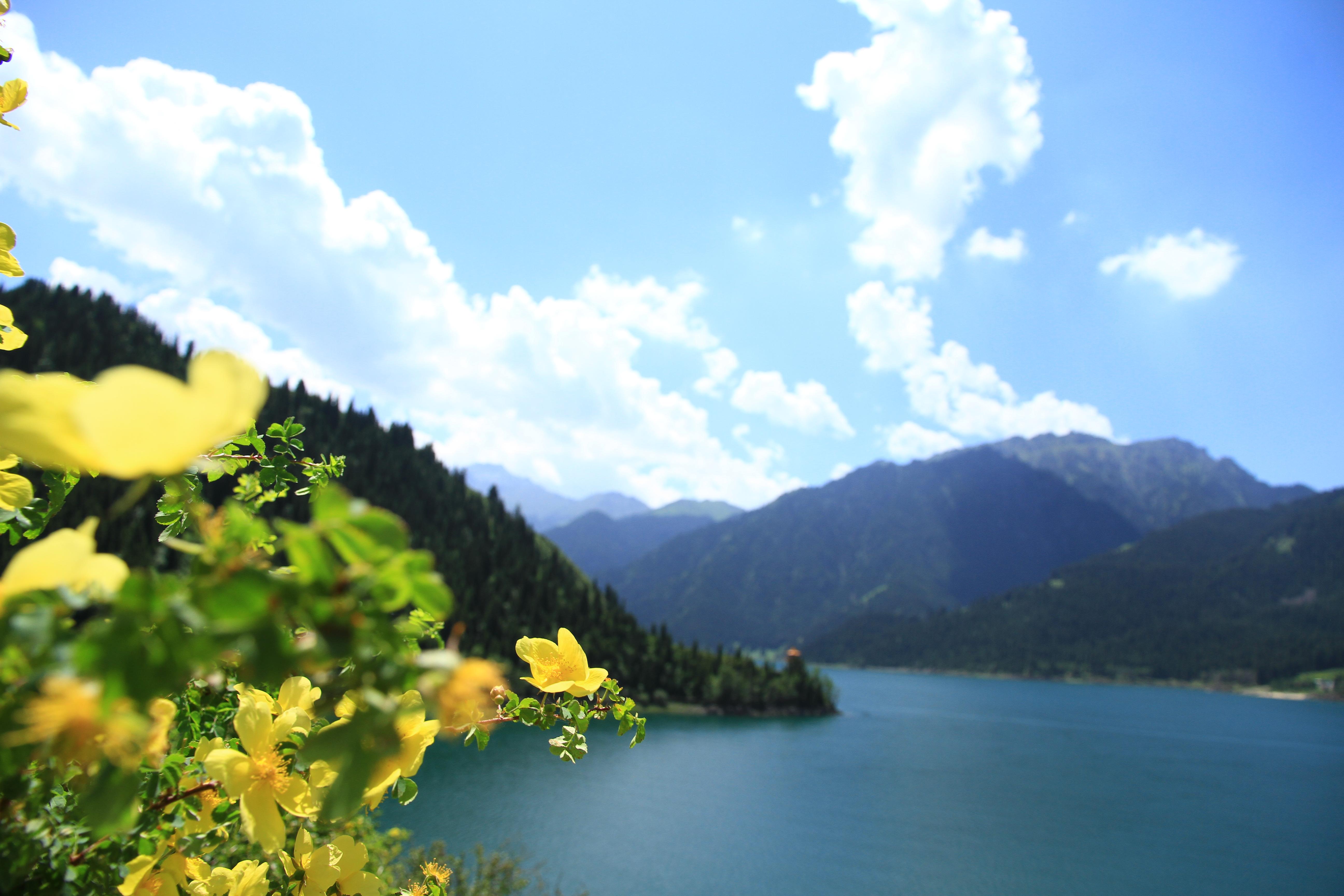 2、天山天池景色。今年七月上旬到北疆旅游。参加了旅行团天池一日游,乘动车到吐鲁番自由行,自驾了独库公路等。新疆之行美、美、美