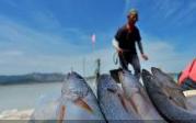 鱼肥蟹美!盘点捕捞旺季山东沿海多地的丰收景象