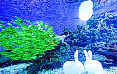 """唯美!海底版的""""嫦娥奔月"""",一饱眼福"""