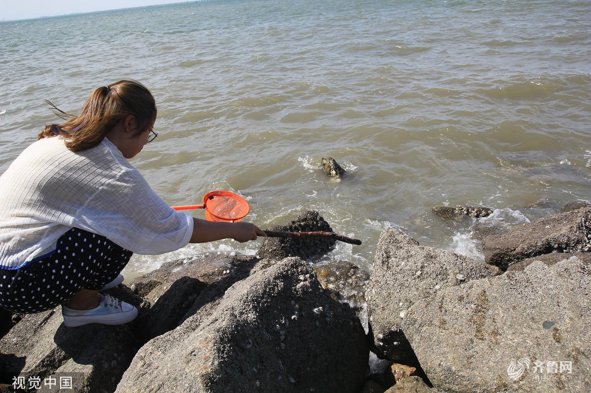 青岛:中秋假日 市民胶州湾畔享受钓蟹乐趣
