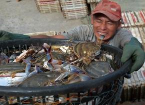 青岛秋捕时节 渔港一片繁忙景象