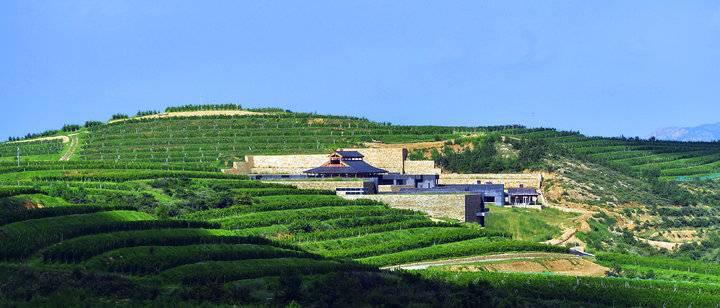 拉菲蓬莱瓏岱酒庄正式开庄 蓬莱打造世界顶级名庄聚集区