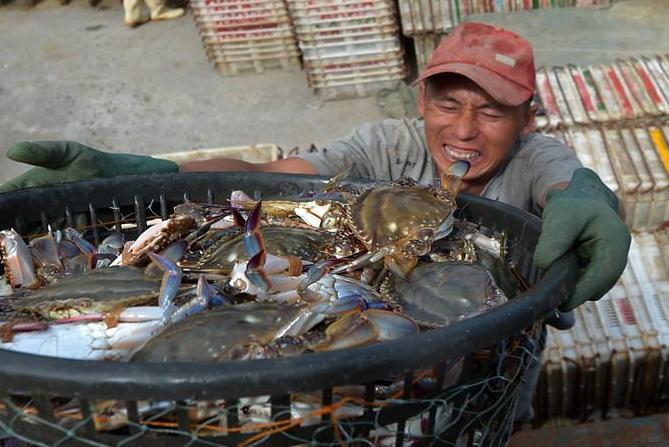 青岛:人勤渔获丰