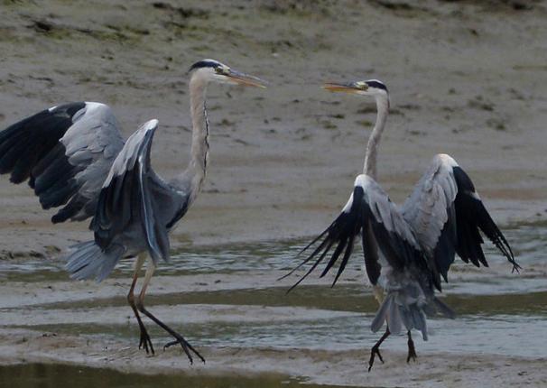 青岛:鹭舞生态湿地