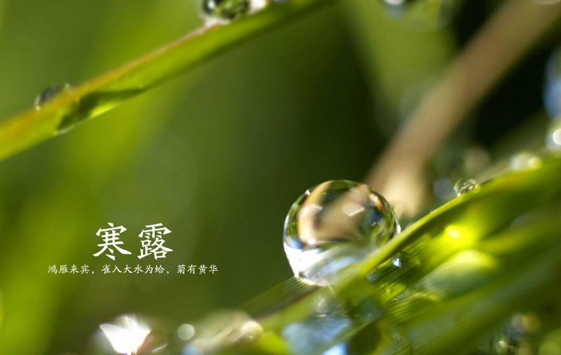 登高赏秋景、饮菊花酒……寒露习俗有哪些?