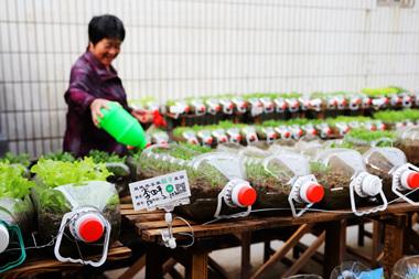 山东青岛开创垃圾分类社区田园