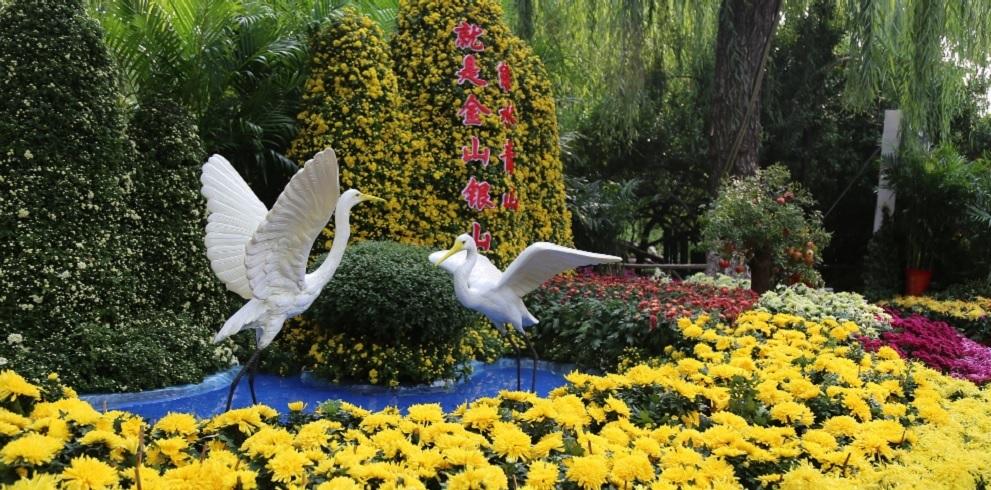济南趵突泉菊花展即将开展 吸引不少游客抢先看