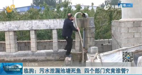臨朐:污水泄漏池塘死魚 四個部門究竟誰管?