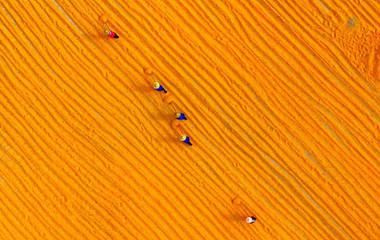 金燦燦這是豐收的色彩 航拍臨沂農民晾曬忙