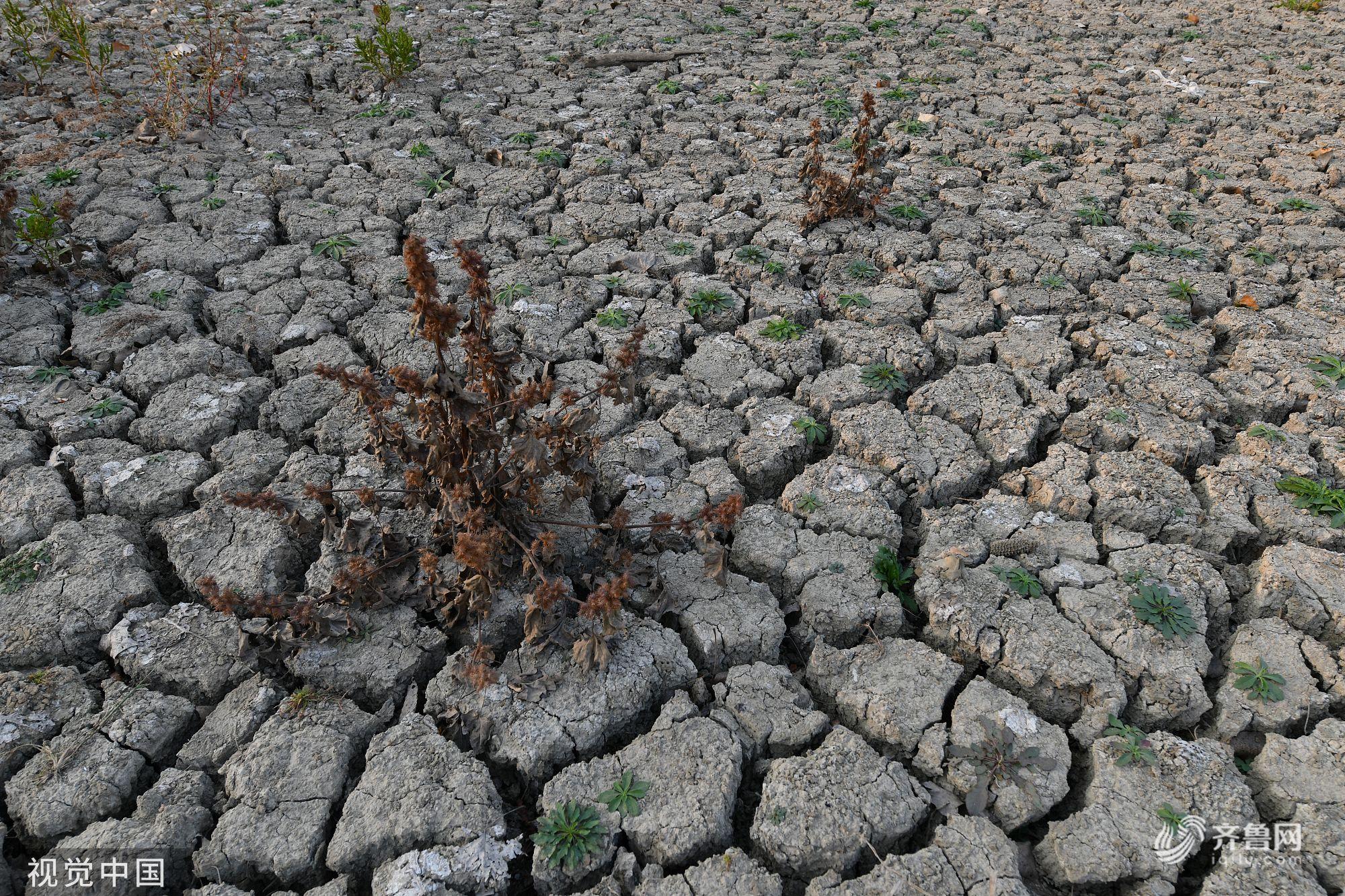 安徽伏秋旱已升级为近40年来最严重