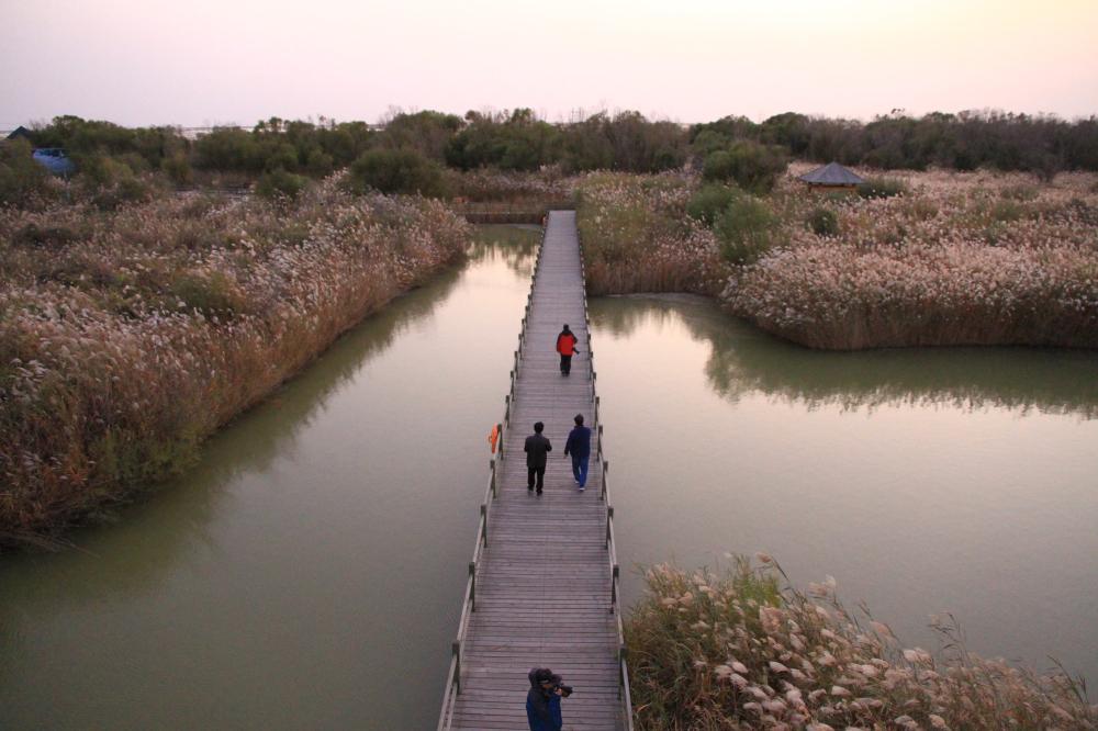 26、黄河湿地公园1