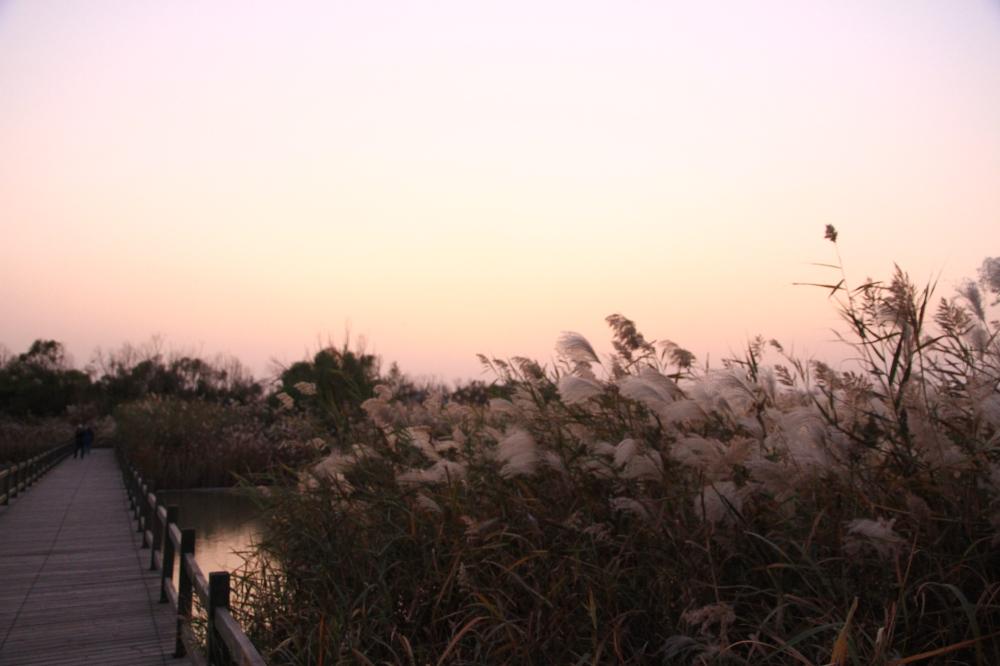 27、黄河湿地公园2