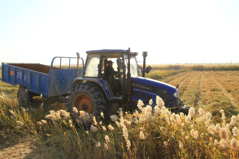 43、驰骋在收割过稻田的拖拉机
