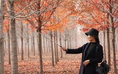 日照:层林尽染秋意浓 枫叶渐红惹人醉