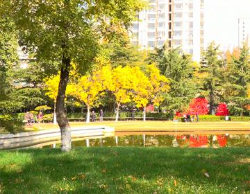 """66秒丨美翻了!潍坊市人民公园换""""新装"""" 1600余株景观植物等你来"""