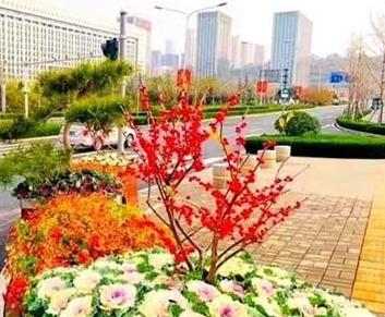 300余万株耐寒花卉扮靓冬日泉城