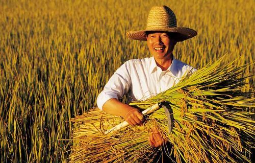 聊城首次为职业农民评职称