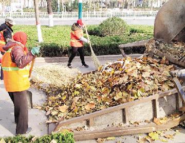 潍坊:机械车辆上街清理落叶
