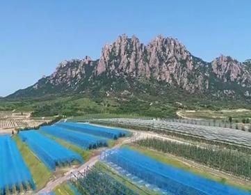 日照:五莲山下崛起农业科技综合体