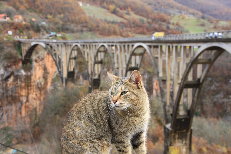 """46、""""虎""""视眈眈。1944年,少校""""老虎""""带领游击队为阻击德国纳粹将大桥炸毁"""