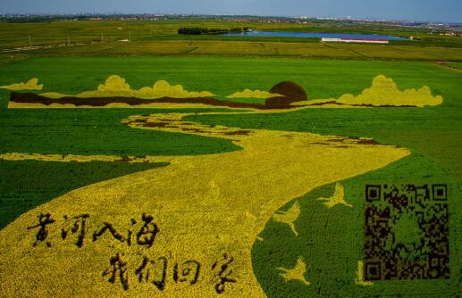 【美丽乡村建设】垦利区农旅融合绘出乡村振兴特色图