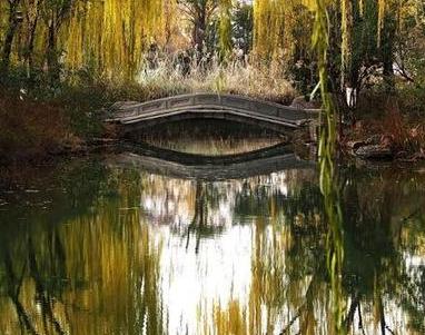 深冬的大明湖 色彩浓艳犹如画板