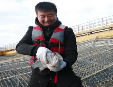 黄海冷水团海域三文鱼养殖顺利验收