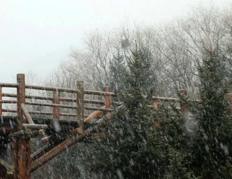 2020年济南首场降雪来啦!南部山区鹅毛大雪漫天飞舞