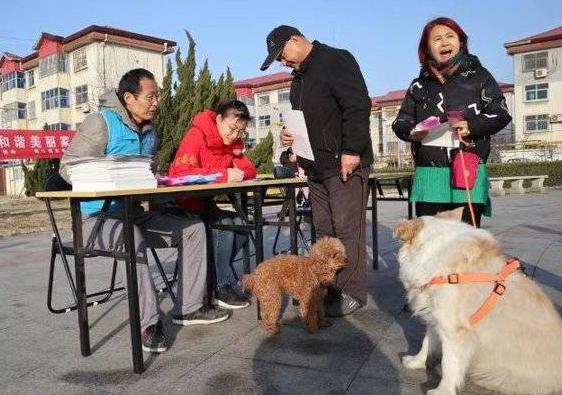 河口区志愿者协会开展文明养犬宣传活动