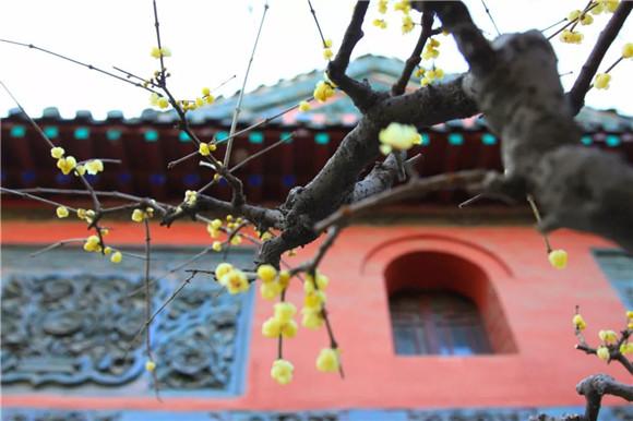 攻略送上!济南的冬天去哪里赏梅?