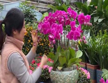 日照迎宾路花卉市场即将进入购销旺季