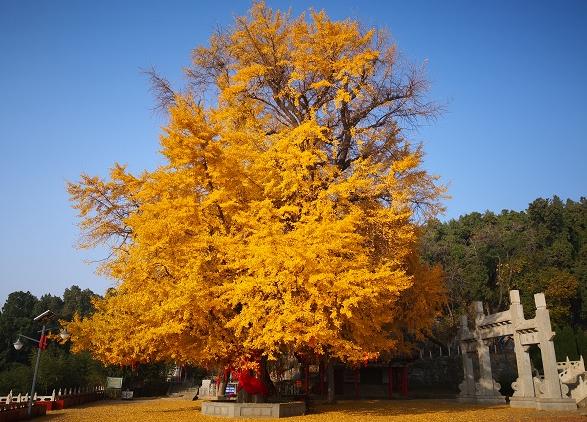 临沂文峰山风景区:古树泉水两相宜
