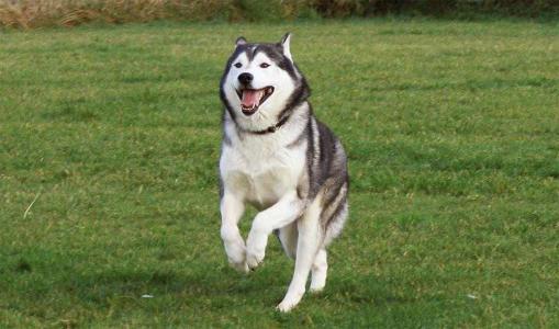 《聊城市养犬管理条例(草案)》公开征求意见