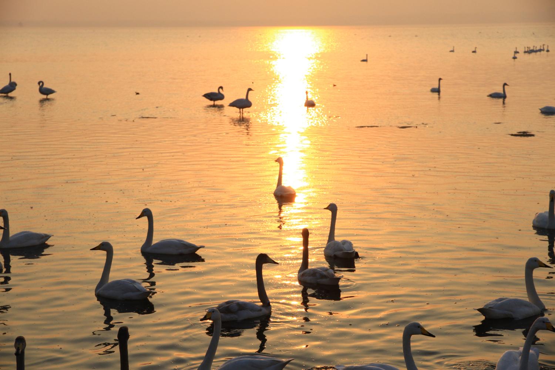 18、天鹅湖的晚霞