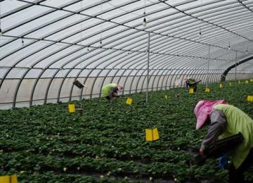 疫情防控、农业生产两不误
