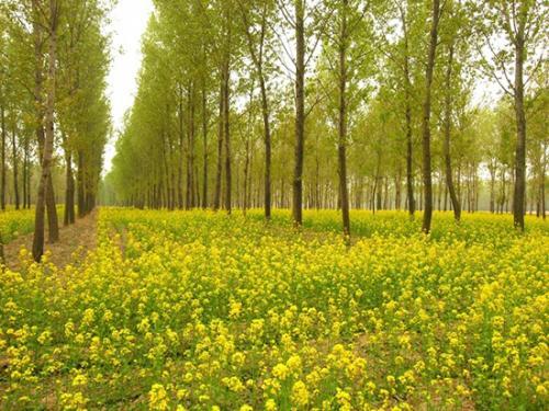 聊城11个村入选第二批国家森林乡村