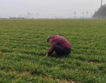 潍坊市寒亭区高里街道:防疫不忘备春耕,2200亩小麦已完成施肥