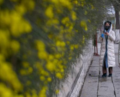 杨柳春风中感受春意 开放式公园客流缓增