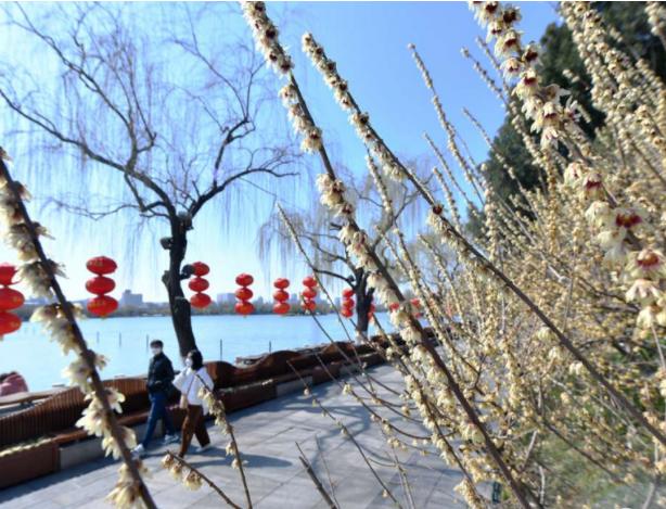 济南处处五彩斑斓春意浓 市民手举相机拍下人间春光彩