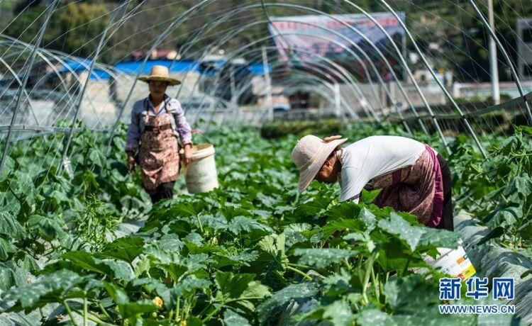 (经济)(4)贵州:春光好 劳作忙