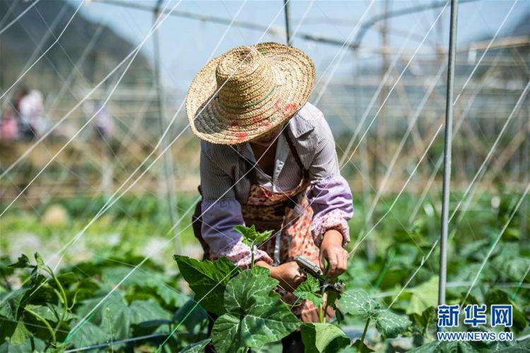 (经济)(2)贵州:春光好 劳作忙