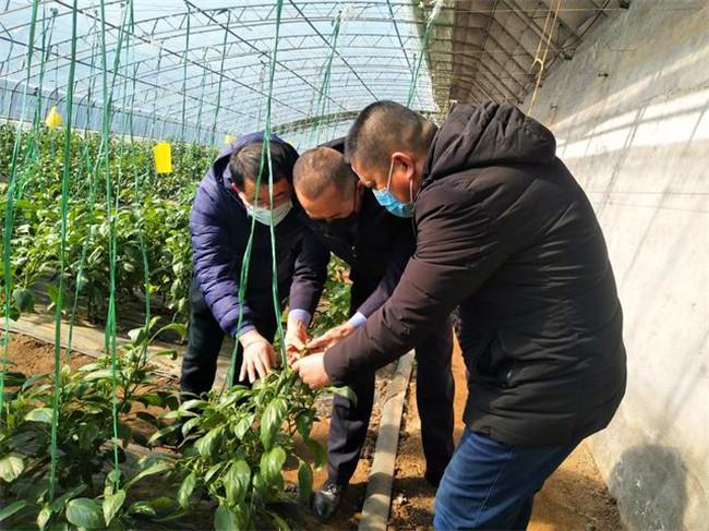 青岛市即墨区农业农村局多措并举力保夏粮丰收