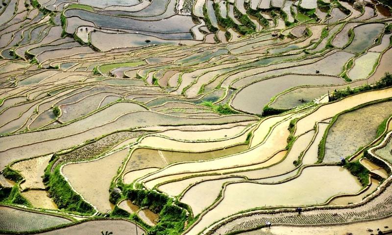 稳粮食生产支持政策密集出炉